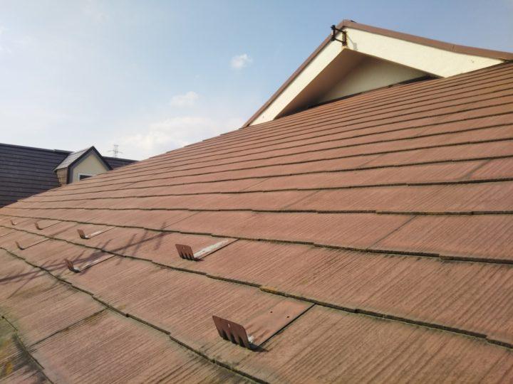 屋根/苔・藻