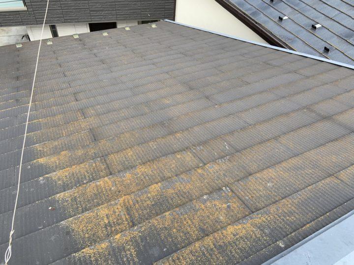 屋根:コケ・藻